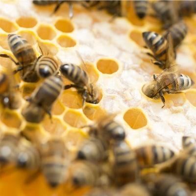 Abeilles sur cadres produisant le miel du chateau selles sur cher