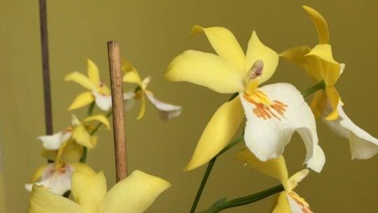 Orchidées vue pendant l'exposition de 2017 au château de Selles sur Cher